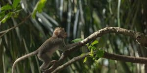 Monkey in Ubud Monkey Forrest