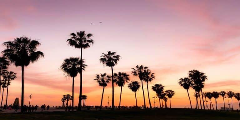 Palmbomen met avondzon op de achtergrond in Los Angeles