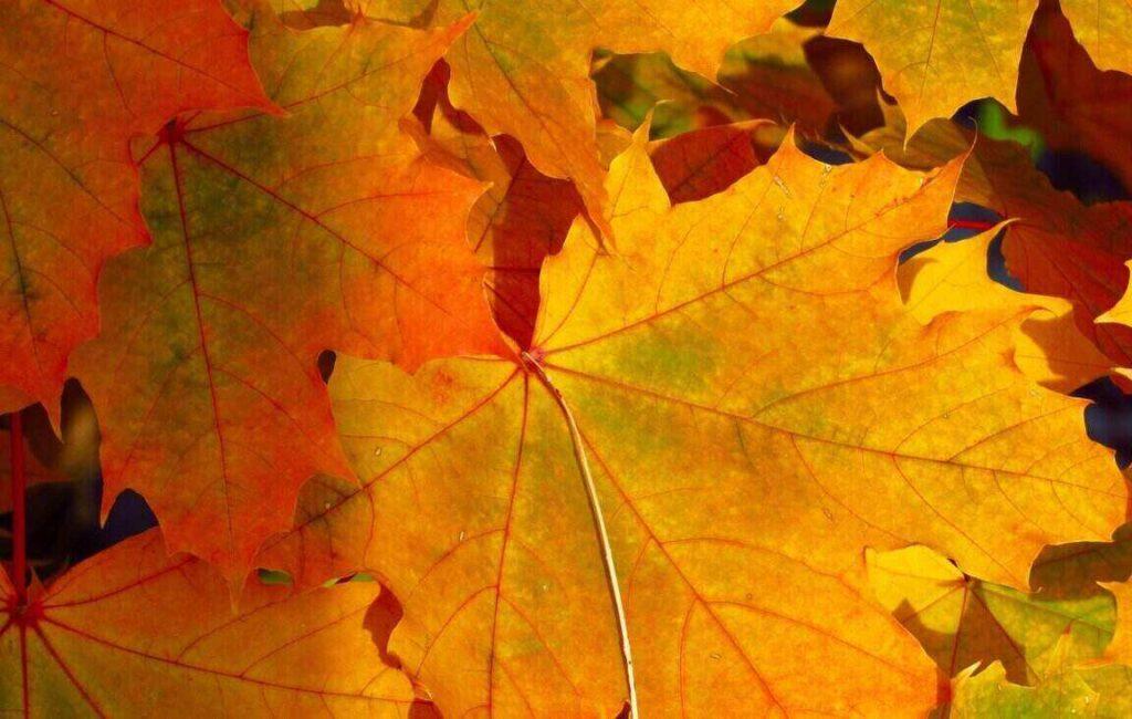 Bladeren in de herfst in Canada