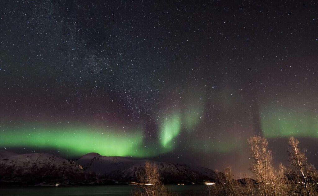 Het noorderlicht boven bomen tijdens een stage in Noorwegen