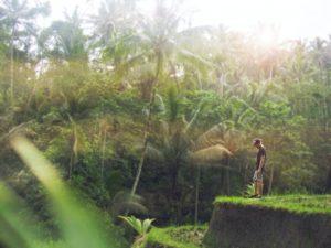 Reisgids Ubud rijstvelden