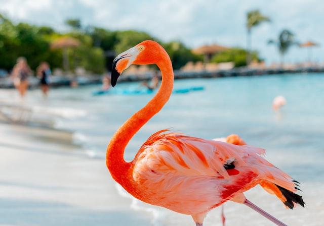 flamingo beach 12 instagram spots op aruba