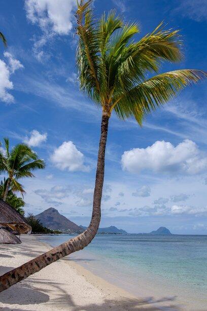 Blauwe lucht met palmboom op een strand in Mauritius